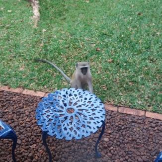 Cheeky Monkey saying hello