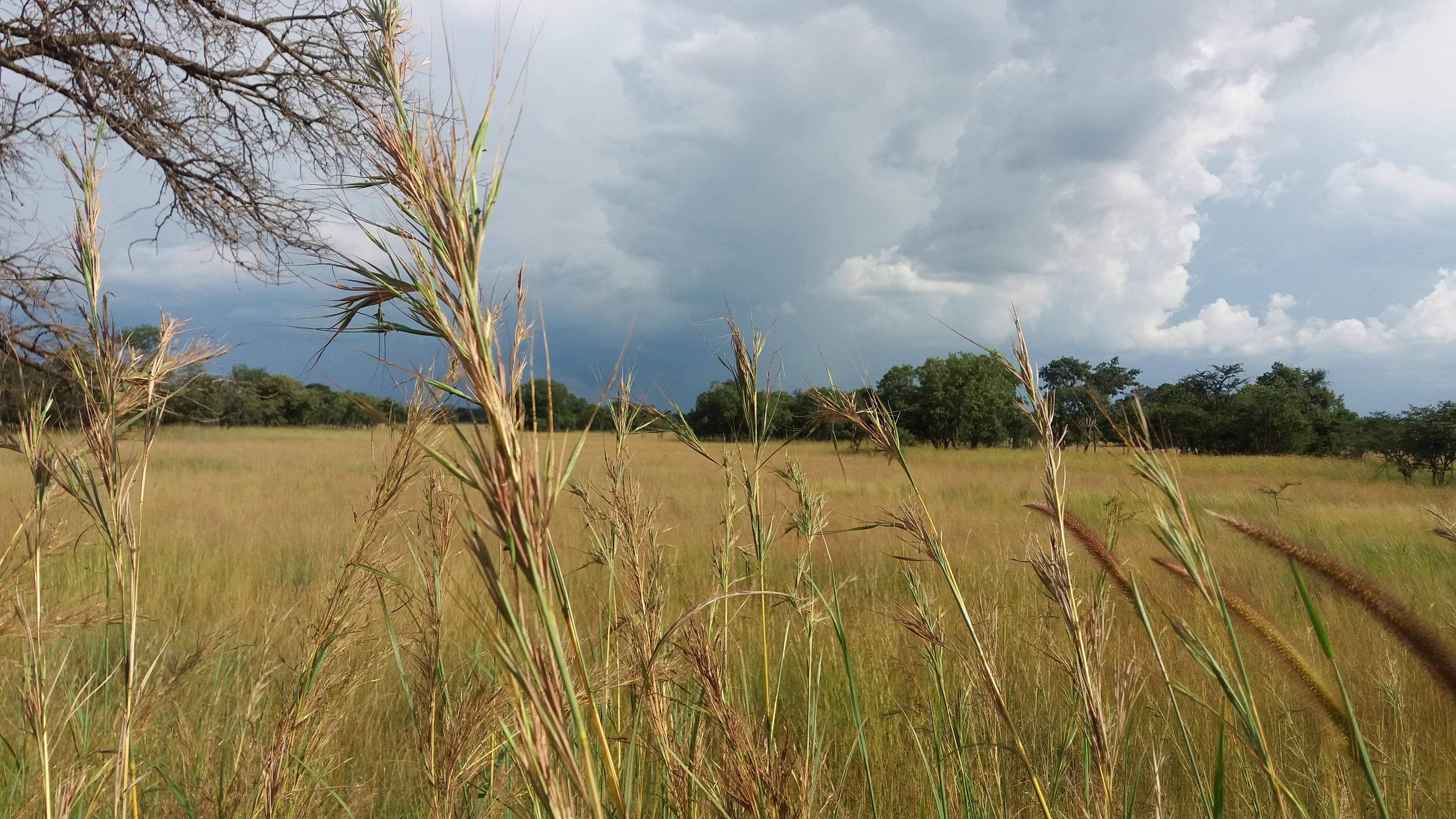 landscape-zambia